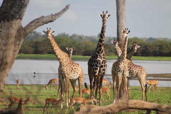 Safari-in-S-dafrika